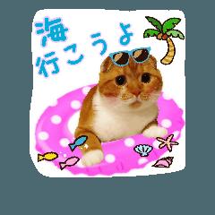 はるまる第3弾 ~夏の日の2017~