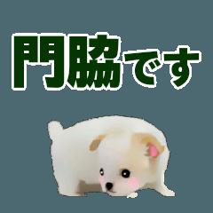 門脇さん用の名前スタンプ・子犬イラスト