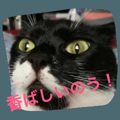 イケメン猫さんおまめさん