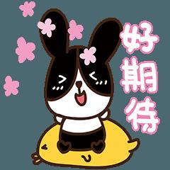 Rabbit Q Baby move