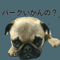 パグ犬ごろーの大分弁2