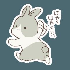 [LINEスタンプ] ちょっぴりあわてんぼうなウサギ