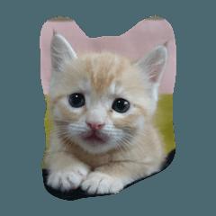Sさんちのネコちゃま