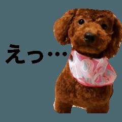 愛犬ペコちゃん