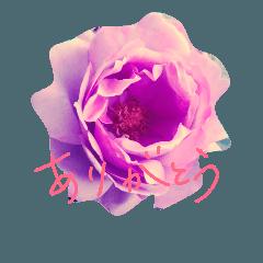 アンティーク風バラ