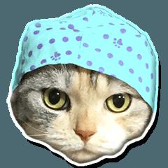 猫のスコさん。2