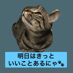 にゃんこ日和(トラちゃんの日常)