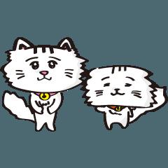 [LINEスタンプ] チンチラの猫スタンプ