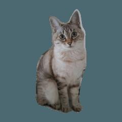 猫のマリィさん