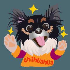元気がでるぞ!愛犬チワワ 日本語版