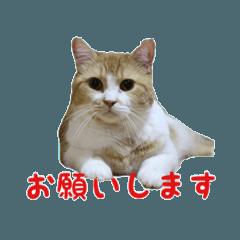 リアル猫・こてこまファミリー