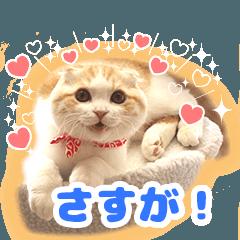 猫の「うなちゃん」