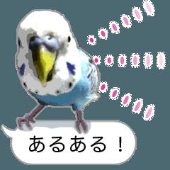 [LINEスタンプ] セキセイ インコのPちゃん、鳥の吹き出し。 (1)