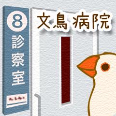 文鳥病院*通院編