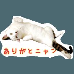 CAT☆ネコのナギちゃん no.1日常