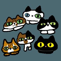 Cat's eye×6