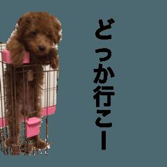 愛犬ペコちゃん2