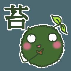 苔玉のコケ美
