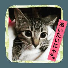 にゃんこ日和2(トラちゃんの日常)