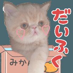 猫スタンプ~だいふく~