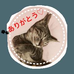 にゃんこ日和3(トラちゃんの日常)