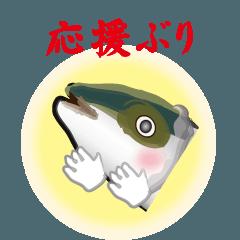 応援ぶり(香川県出身鰤18弾)