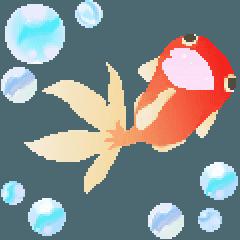 ▶動くお洒落な金魚の1年