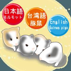 私たちのモルモット 日本語+台湾語+英語