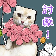 Hang Hang ' Cute Cat