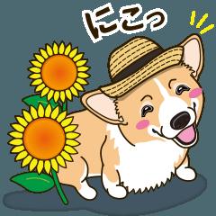 気軽にスタンプ コーギー 夏編