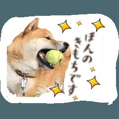 [LINEスタンプ] 柴犬のしばたろうさん
