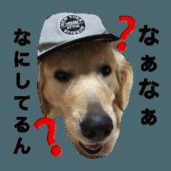 ひめちゃん ひめちゃん 777.