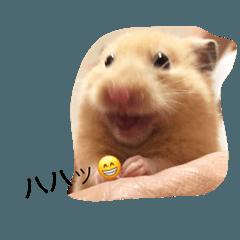 ほのかちゃん(ハムスター)