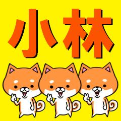 超★小林(こばやし・コバヤシ)な柴イヌ