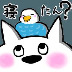 白ワンコの喜怒哀楽 広島弁 シーズン2