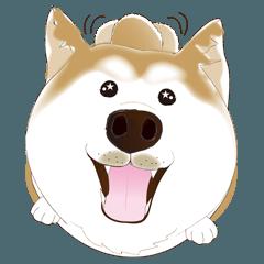 かわいい柴犬3