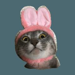サバトラ猫ペコちゃんのスタンプ